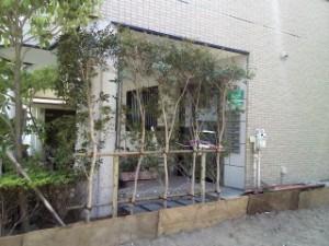 東松山市の外構・川口市の倒木支柱・蓮田市の消毒、上尾市の伐採