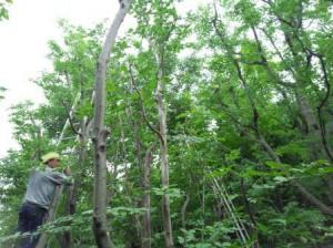 坂戸 年間管理の植栽剪定・世田谷池の水漏れ