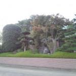 東松山市W様邸庭木の剪定3