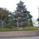 東松山市W様邸庭木の剪定4