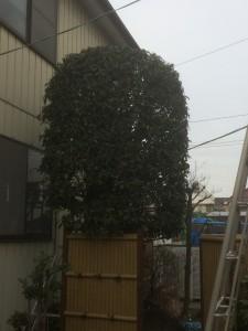 川口市庭木の剪定