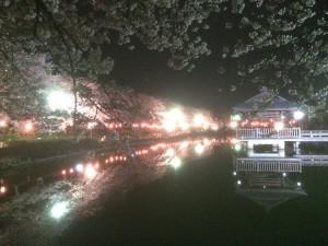 休日ゴルフ、夜桜見物