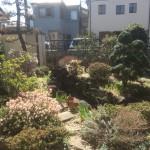 富士見市のお庭工事 着工、東松山市の外構造園工事 植込みの続きと砂利敷き等、芝生引取り