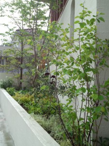 川口花壇植込32