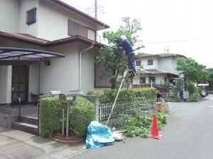 東松山剪定①