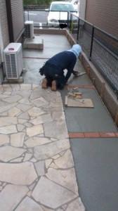 鴻巣コンクリート打ち②