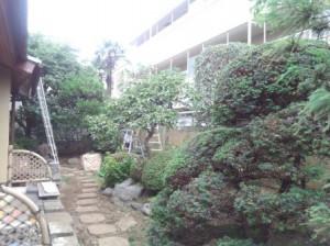 さいたま市庭木剪定7.4③