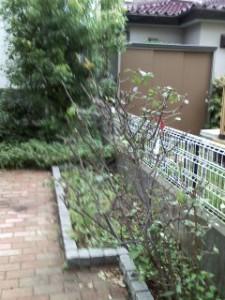 杉戸鎌田邸④