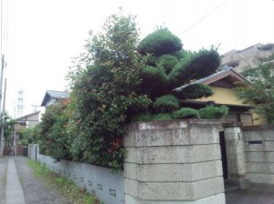 さいたま市庭木剪定着工前8