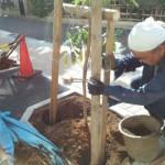 世田谷レシピ下北タブの木鳥居支柱