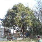 さいたま市岩槻区カシの木伐採・東松山市高坂ブロック工事