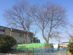 東松山市伐採工事、美里町お庭天然石乱張り