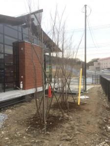 東松山市 化石と自然の体験館 植栽工事完成