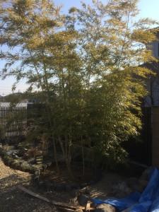 美里町竹の成長抑制処理工事