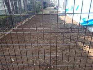 マンション専用庭芝張り 雑草撤去後