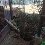 上尾市庭木の移植、川越市外構工事の鋤取り