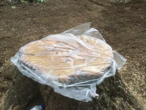 東松山市伐採根薬剤注入完了