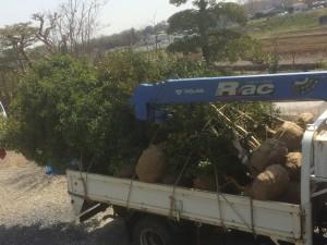 三芳町の植木積込