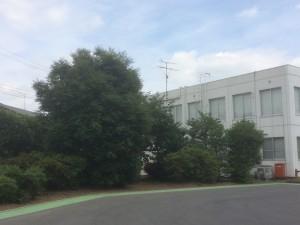 上尾市の手入れ工事 お見積り、東松山市の外構造園工事 ブロック土留積み、 チャドクガ注意!