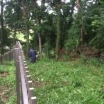 東松山市の庭園管理工事 草刈と剪定