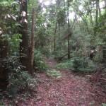 吉見町の杉の木植込み、高坂NT 剪定工事、 東松山市のブロックフェンス工事